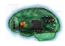 """""""Of Two Minds Neuronal Circuitry"""""""