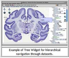 """Brain Maps Site Image"""