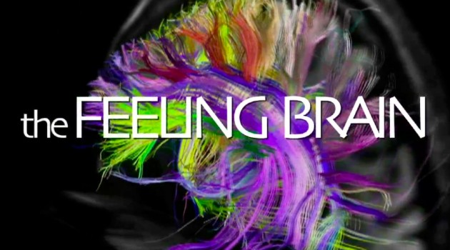 the_feeling_brain