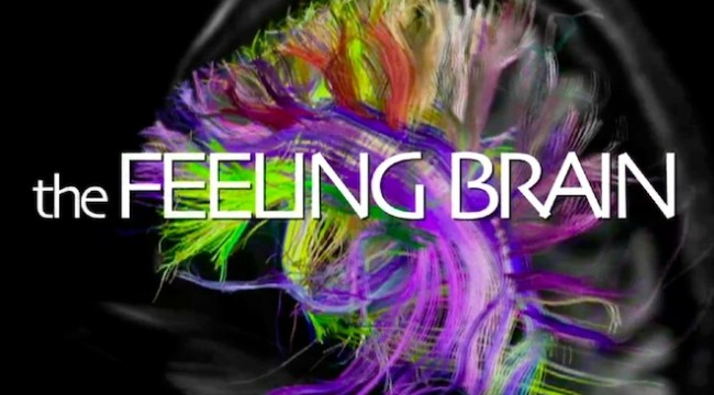 the-feeling-brain